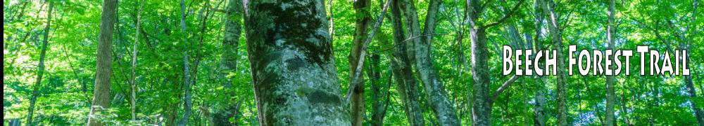 beech-foresttrail